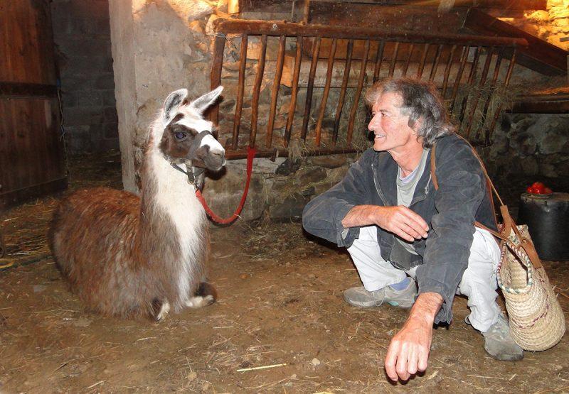 bergerie lama animaux contact bien-être