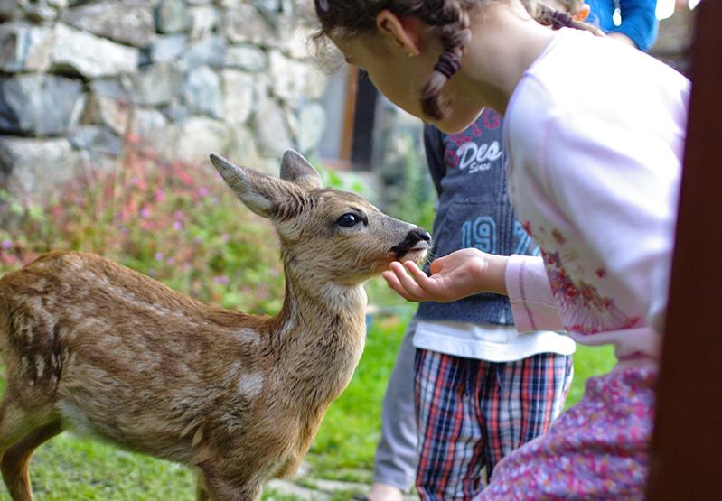 chevreuil enfants sauvegarde animaux